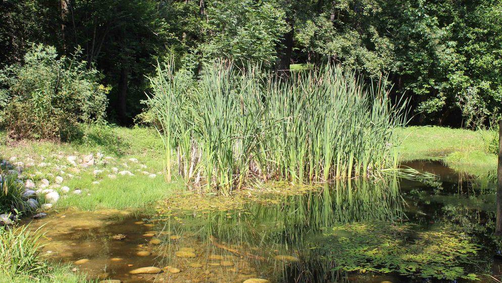 Azione settimanale di migros ticino un oasi nel mendrisiotto for Nicchia sinonimo