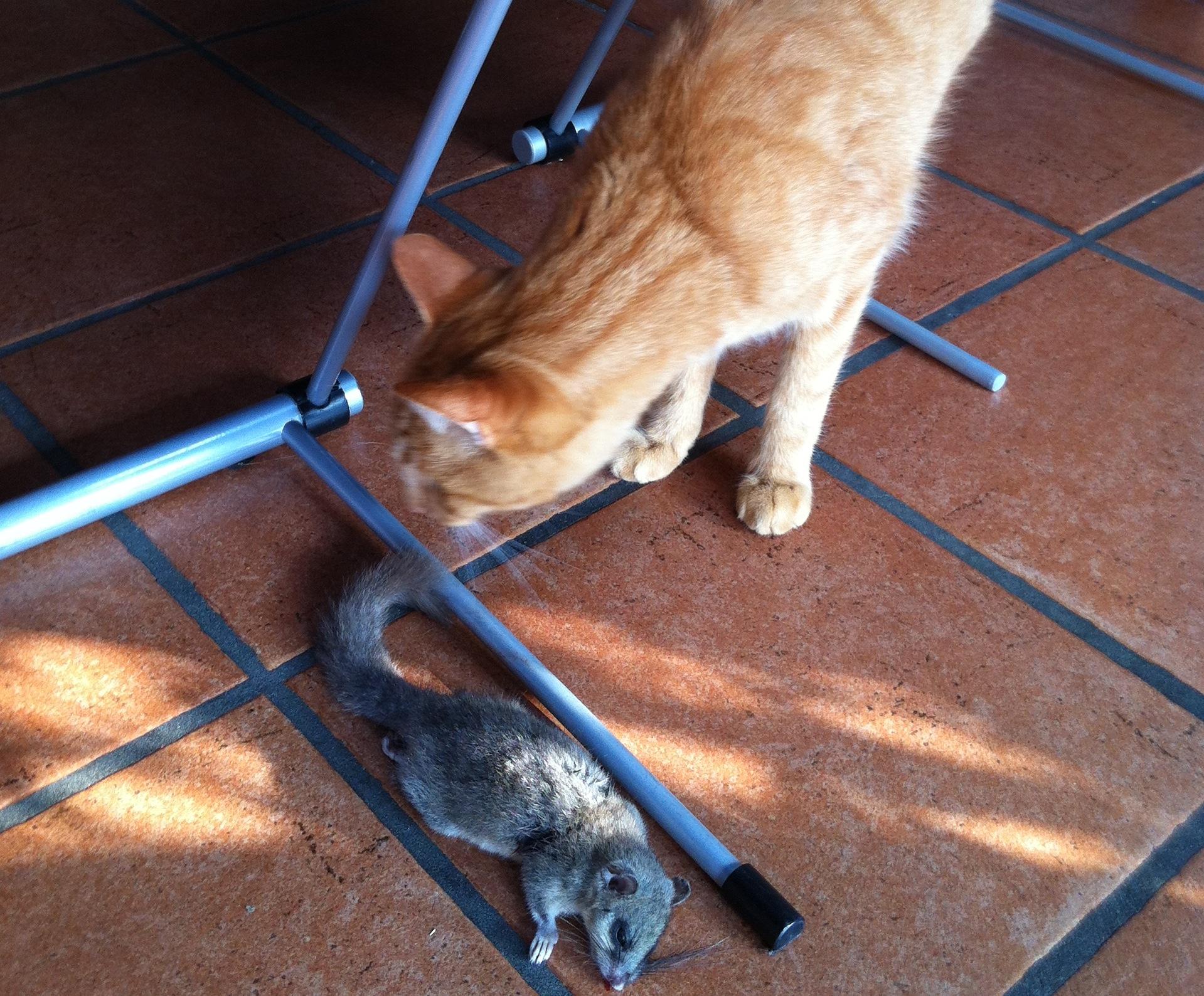 Azione Settimanale Di Migros Ticino Gatto Caccia Topo Ma Non Solo
